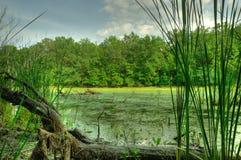 Pântano e árvore seca Imagem de Stock