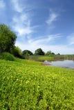 Pântano e prado do verão Imagens de Stock