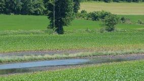 Pântano e prados Foto de Stock