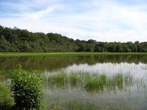Pântano em Ain, France Imagem de Stock Royalty Free