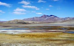 Pântano em tibet Fotos de Stock Royalty Free