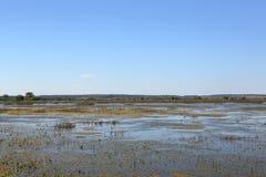 Pântano em uma reserva natural nacional Imagens de Stock Royalty Free