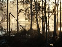 Pântano Forest2 de Cypress da névoa da manhã Fotos de Stock Royalty Free