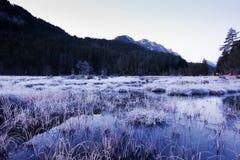 Pântano gelado no cenário do inverno Fotografia de Stock