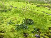 Pântano Mossy Fotografia de Stock