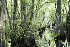 Pântano na conserva do pântano Imagens de Stock