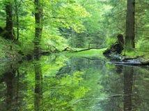 Pântano na cor verde da mola fresca da floresta Ramos dobrados à superfície da àgua, reflexão no nível de água, hastes das ervas Fotos de Stock