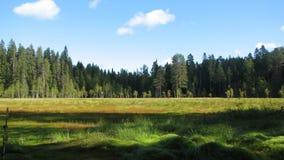 Pântano na floresta Imagens de Stock