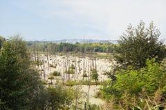 Pântano na floresta Imagem de Stock