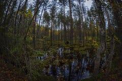 Pântano na floresta Fotografia de Stock Royalty Free