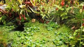 Pântano na selva Fotos de Stock Royalty Free