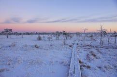 Pântano no inverno Fotografia de Stock Royalty Free
