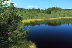 Pântano no parque nacional de Sumava Imagem de Stock
