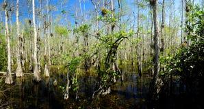 Pântano no parque nacional dos marismas Foto de Stock Royalty Free