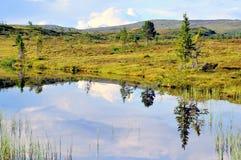 Pântano no verão Fotos de Stock Royalty Free