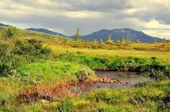 Pântano no verão Imagem de Stock