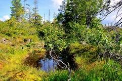 Pântano no verão Imagem de Stock Royalty Free