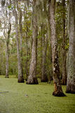 Pântano perto de Nova Orleães, Louisiana fotos de stock royalty free