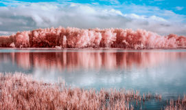 Pântano Trailhead de Louisville no rio de Minnesota imagens de stock royalty free