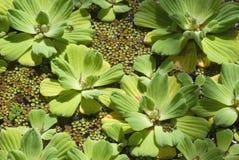 Pântano tropical. Imagem de Stock Royalty Free