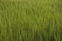 Pântano verde Fotos de Stock