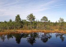 Pântano Viru na natureza de Estonia.The de Estónia. Imagens de Stock