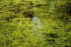 Pântanos Imagem de Stock