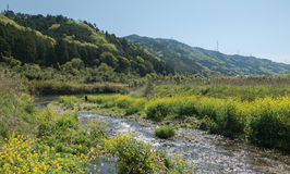 Pântanos ao longo do rio de Hozugawa fotos de stock