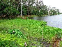 Pântanos cambojanos Imagens de Stock