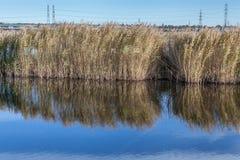 Pântanos de Rainham em um dia ensolarado com um córrego Foto de Stock Royalty Free