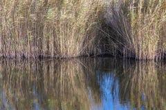 Pântanos de Rainham em um dia ensolarado com um córrego Foto de Stock