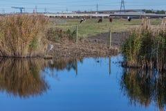 Pântanos de Rainham em um dia ensolarado com um córrego Fotos de Stock Royalty Free