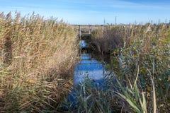 Pântanos de Rainham em um dia ensolarado com um córrego Fotografia de Stock Royalty Free