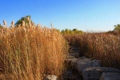 Pântanos de Reed Imagem de Stock