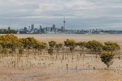 Pântanos dos manguezais em Auckland na maré baixa foto de stock royalty free