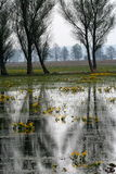 Pântanos e árvores fotos de stock royalty free