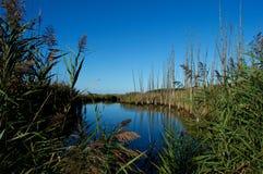 Pântanos e pantanais da costa do jérsei Fotografia de Stock Royalty Free