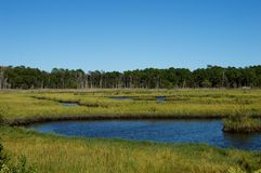 Pântanos e pantanais da costa do jérsei Fotos de Stock Royalty Free