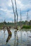 Pântanos húngaros Fotografia de Stock