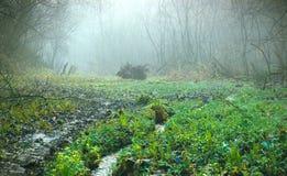 Pântanos na névoa escura Imagem de Stock Royalty Free