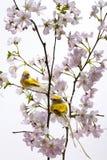 Pâques. Photo libre de droits