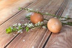 Pâques - branches de floraison avec deux oeufs Photos stock
