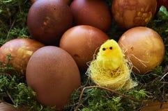 Pâques a décoré des oeufs Images stock
