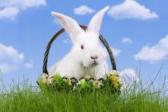 Pâques-lapin Images libres de droits