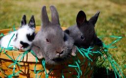 Pâques ? Lapins Photos stock