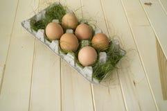 Pâques Mensonge d'oeufs dans le récipient pour des oeufs Herbe verte Image libre de droits