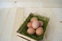 Pâques Mensonge d'oeufs dans le récipient pour des oeufs Herbe verte Photos libres de droits