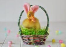 Pâques mignonne Photos libres de droits