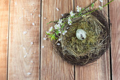 Pâques - nid en osier avec l'oeuf de caille avec les branches fleurissantes Photos stock