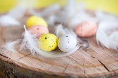 Pâques, oeufs colorés, jaune, blanc, arbre blanc, fond blanc, feathersa, poulet eggs, des oeufs de caille Photographie stock libre de droits
